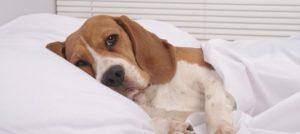 Gastrite del cane: cos'è, quali sono i sintomi e come si cura