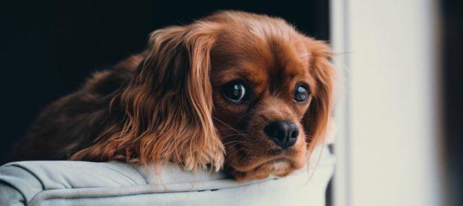 La mimica facciale e la lettura del cane. Capitolo secondo.