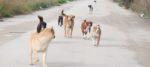 Dalla Sardegna fondi per la sterilizzazione delle femmine di cane.