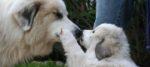 La famiglia si allarga: l'arrivo del secondo cane.