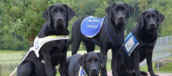 Cani guida in aiuto ai bambini con autismo