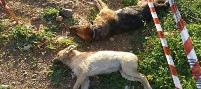 Allevatore a processo per cani avvelenati