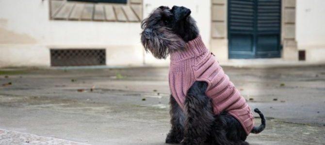 Nasce Emma Firenze il nuovo guardaroba di lusso per cani
