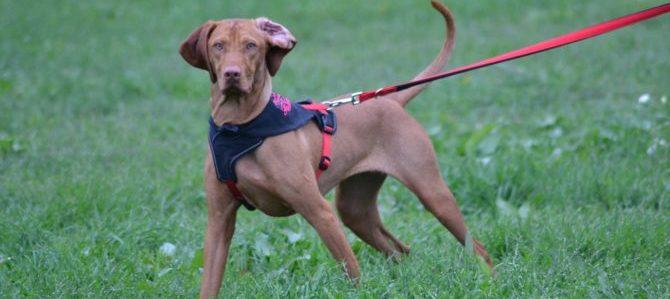 La Zampinoteca di Baggio, asilo per cani e non solo