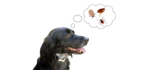 Pulci del cane: come riconoscerle ed eliminarle
