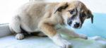 Il cane e le sue paure: la fobia sociale.
