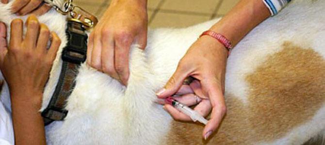 Il diabete nel cane? Da non sottovalutare