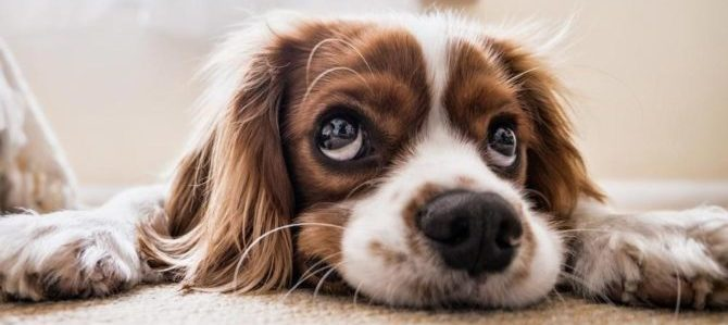 In Spagna una legge per riconoscere gli animali come senzienti