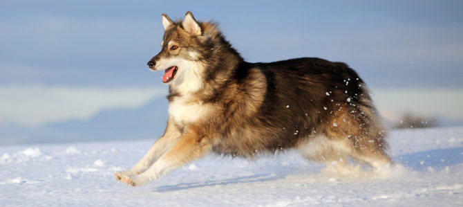 Vacanze con i cani sulla neve