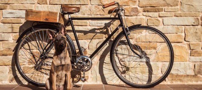 2Ruote4Zampe, il viaggio in bicicletta in compagnia dei nostri amici cani