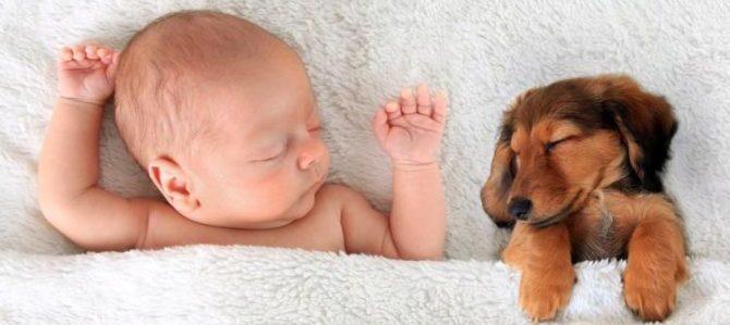 I bambini crescono più responsabili se devono prendersi cura di un cane
