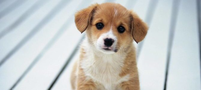 In soli tre anni, boom delle adozioni degli animali da compagnia
