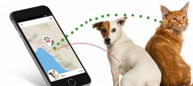 Localizzatori per cani, un modo per non perdere Fido