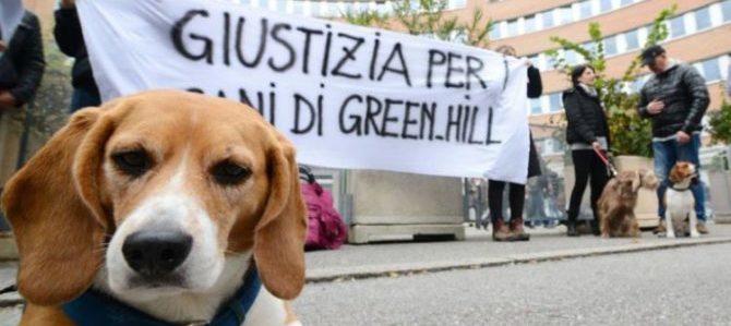 L'Ordine dei veterinari non radia il medico di Green Hill condannato