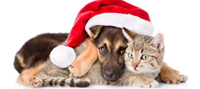 Sono arrivate le Feste di Natale