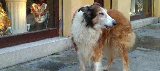 La storia di Penny e Luna due vecchiette e un lieto fine