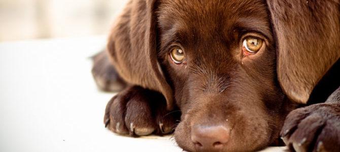 Nello sguardo del cane.