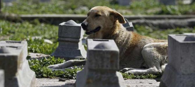 Cosa si deve fare quando il cane muore?