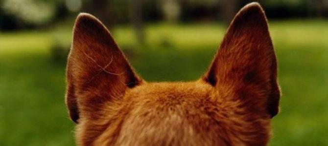 Il cane, un comunicatore silenzioso e non solo: abbai e dintorni, viaggio nella comunicazione sonora.