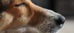Il senso delle cose, la percezione del mondo attraverso il cane.