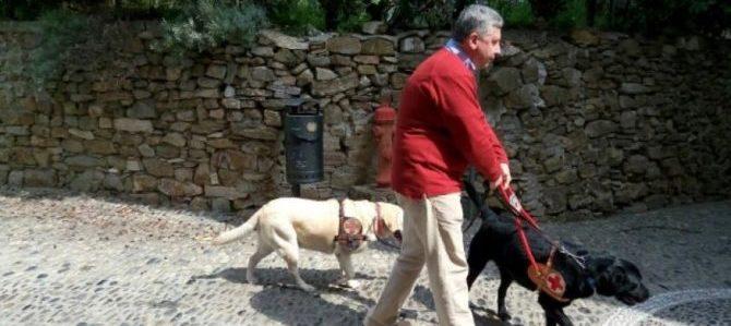 Cani per ciechi, da oggi sulle scale mobili