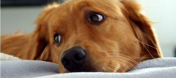 I cani potranno entrare in Ospedale anche a Monza e Desio
