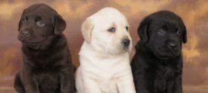 Ronnie il primo cagnolino abbandonato nel nuovo anno