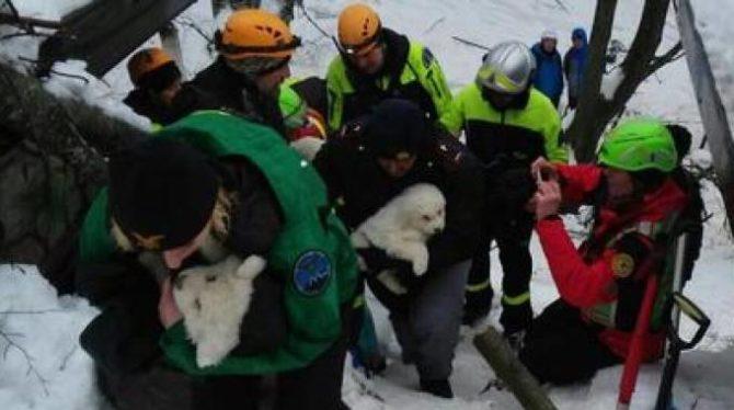 Il soccorso animali nel Codice della Protezione civile diventa legge