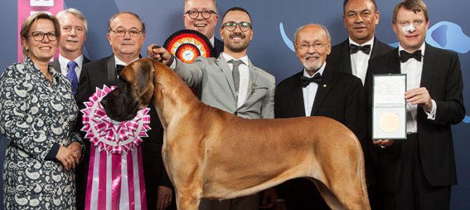 Il cane più bello del mondo 2017
