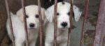 Roma, aumenta il costo del canile Muratella e niente servizi