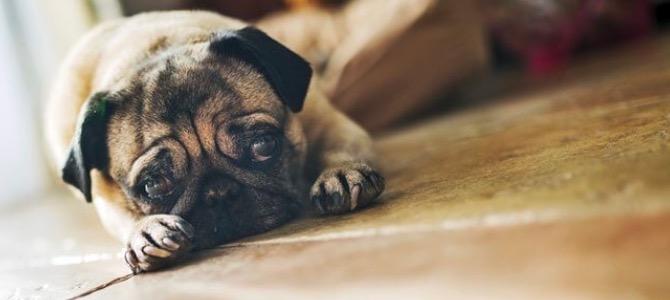 Gastrite del cane: cause, sintomi e terapia