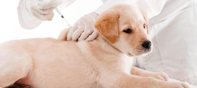 Quali sono i vaccini obbligatori per il cane?