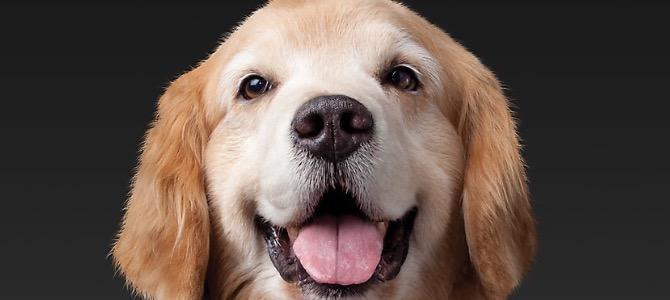 Le feci del tuo cane sono normali?
