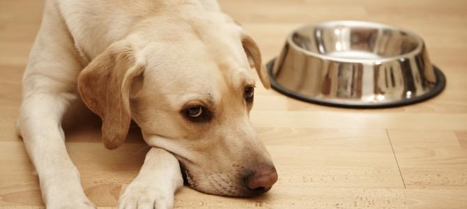 L'intolleranza alimentare nel cane
