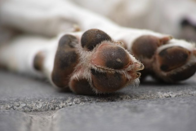 Polpette avvelenate, uccisi 15 cani randagi a Sciacca
