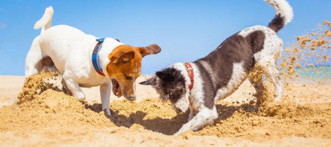 Tar: è ok no a cani in spiaggia in estate