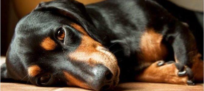 A Padova è attivo il servizio di hospice per cani
