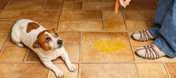 A Chiavari bottiglia acqua per pulire la pipì dei cani