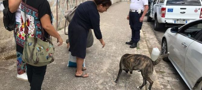 """Adottato a Nardò il cane di nome """"Lupo"""""""