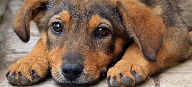 Un penny per i suoi pensieri : la memoria del cane.