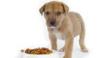 I derivati della carne negli alimenti per cani: cosa sono?