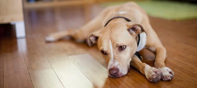 Sverminazione cane adulto: quando serve?