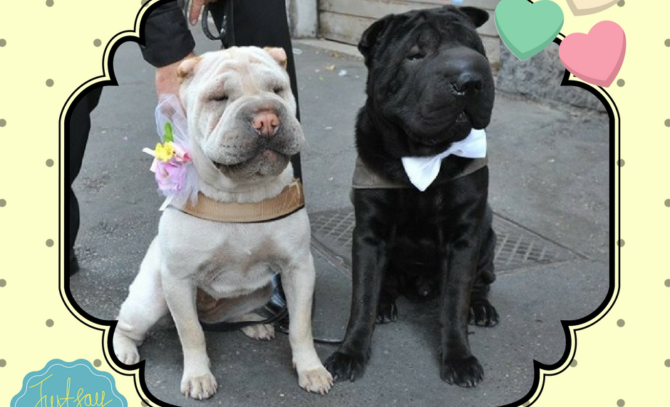 Wedding Dog Cake – sposarsi insieme a Fido