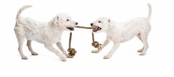 Le motivazioni del cane,  il fondamento del suo comportamento.