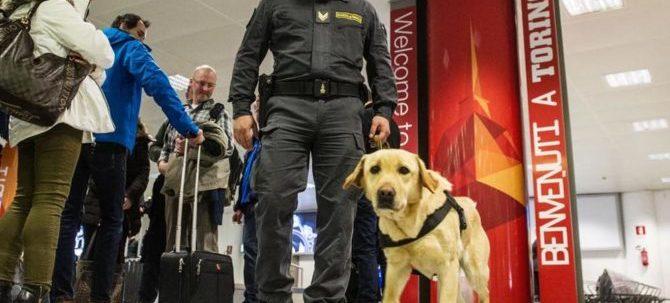 All'aeroporto di Torino, il cash dog Escos fiuta ingenti somme di danaro occultate tra i bagagli