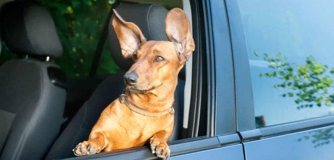 Cosa bisogna fare per portare il cane all'estero?