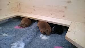 Sala Parto Per Cani : Come gestire la gravidanza nel cane mondofido.it