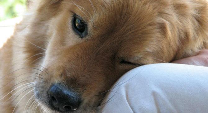 Proteggere il cane dalle zanzare attraverso l'ambiente in cui vive