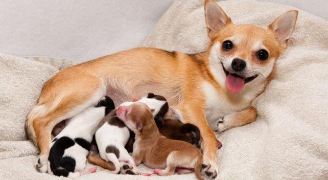 Il parto. Un viaggio emozionante nella vita del nostro cane