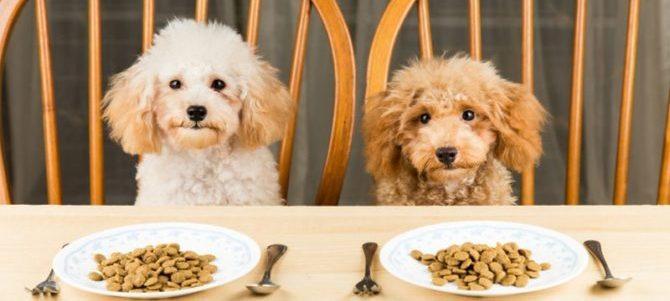 I carboidrati sono essenziali nell'alimentazione del cane?